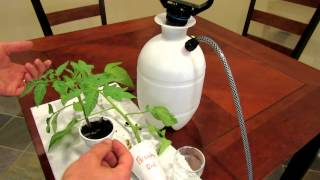 Aspirin: Tomato Disease Prevention by Using Aspirin to Trick Your Tomato - TRG 2012
