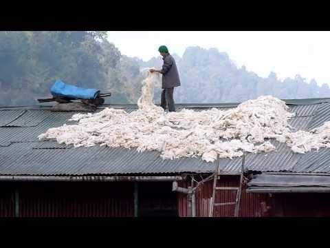 Darjeeling, Himalayan Wool Drying on a Roof