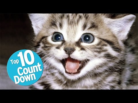 Top 10 Best Cat Breeds : For Cat Lovers