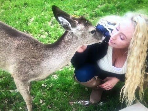 Reunited After 2 yrs with My Pet Deer Albert