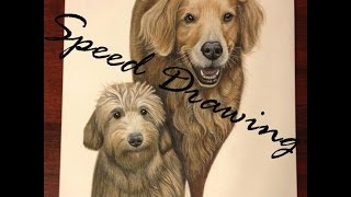 Speed Drawing Color Pencil Pet
