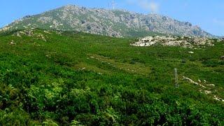 Serra di Pignu - Bastia - Corsica