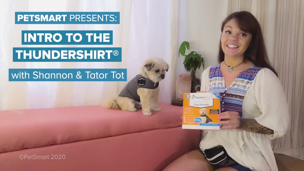 Petsmart Pet Stylist Reviews Glassdoor