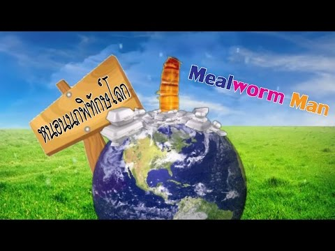 Mealworm สุดยอดงานวิจัย หนอนนกย่อยสลายโฟมได้