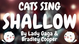 Baixar Cats Sing Shallow by Lady Gaga & Bradley Cooper | Cats Singing Song