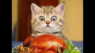 Лучшие Приколы про животных | Подборка самых смешных видео про животных #5
