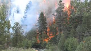 Close Up Footage Of The High Park Fires In Colorado - Forest Fire