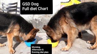 German Shepherd Dog Full Day Diet Plan Morning, Afternoon & Evening Diet