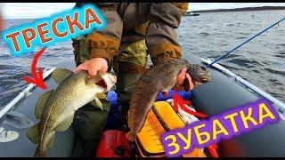 ТРЕСКА / ЗУБАТКА /Рыбалка в Белом море / Хороший клев