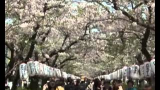 Япония сегодня: Весна