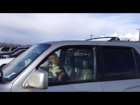 Impatient Dog Honks Car Horn