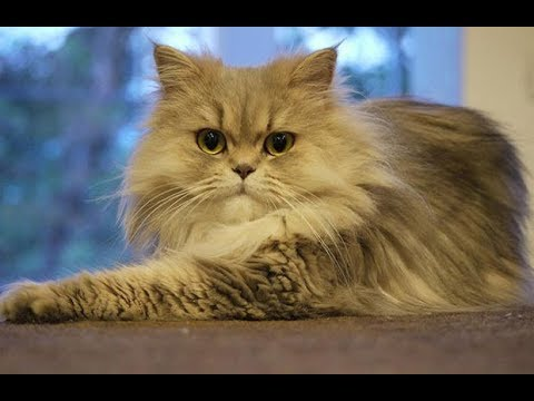 Cat saved a new born baby | the most heroic cat in Russia