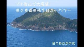 冬でも楽しめるプチ登山で大展望!~屋久島番屋峰半日ガイドツアー