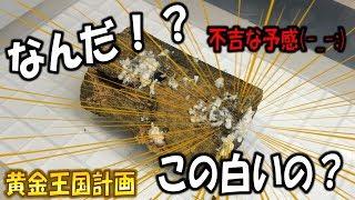 クワガタ&カブトムシ ババオウゴンオニクワガタ(ババ子)の産卵セット...