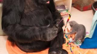 Koko Singing
