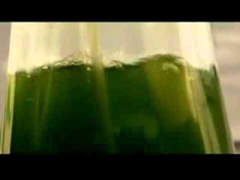 Using algae spirulina for bio fuel