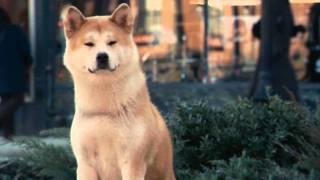 Хатико - самый верный друг..avi