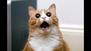 Смешные кошки и коты 2017|Смешные видео|Ютуб|#1