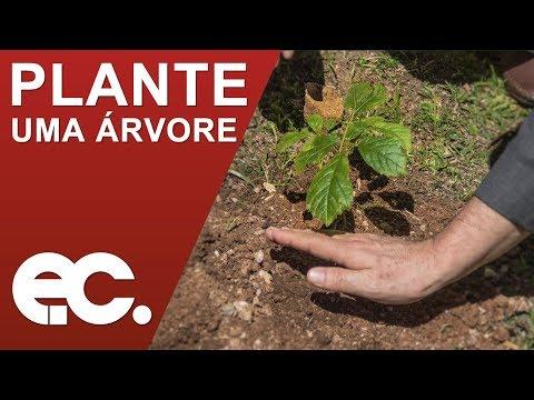 Plante uma árvore: primeira muda da campanha é plantada em Campos do Jordão