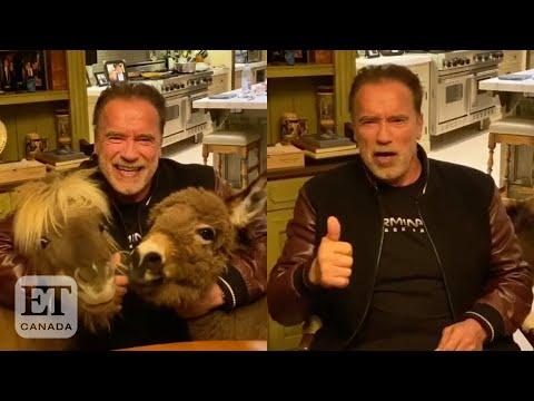 Arnold Schwarzenegger Recruits Mini-Pony And Donkey For Coronavirus PSA