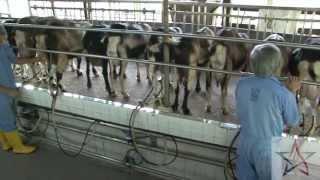 Wild Singapore: Hay Dairies Goat Farm