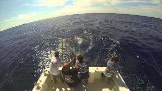 Yellowfin Tuna Triple Header