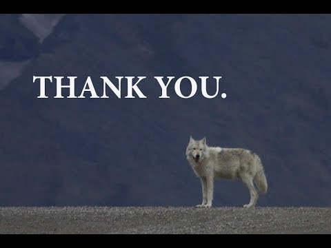 2013 Thank You to Online Activists