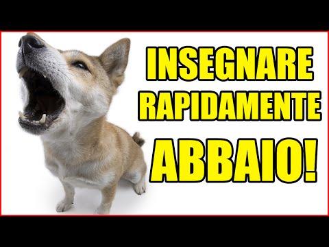 Easy Dog -