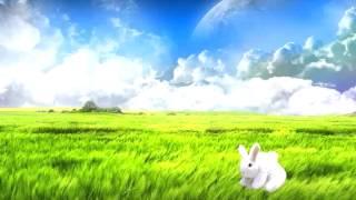 bunny flip