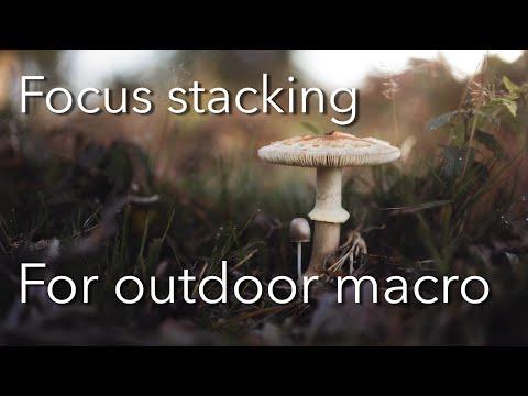 Focus stacking and Autumn colours: Photoshop tutorial thumbnail