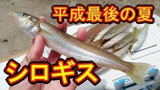 【盛夏】シーバスロッドで楽しむシロギスの投げ釣り!『平成最後の夏』