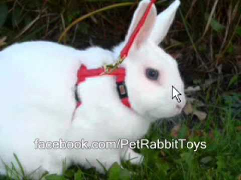 Rabbit Breeds I Love My House Rabbit