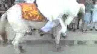 Veer Mara Ghori Charya Funny