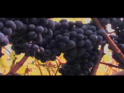 Whidbey Island Winery - Langley, Washington