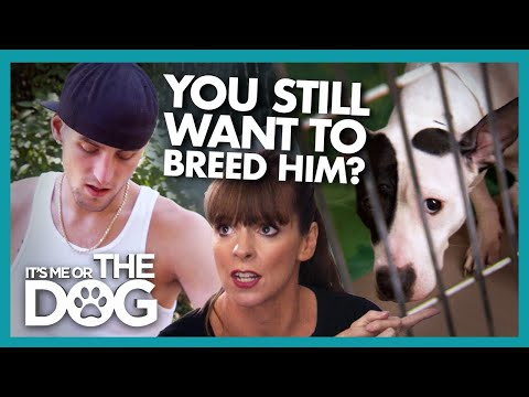 Can a Reality Check Change the Mind of Owner Set on Breeding? |  It's Me or The Dog