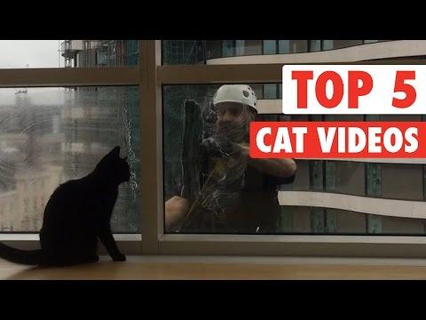 Top 5 Cat Videos || Jan 8 2016
