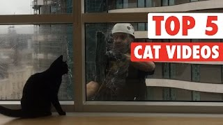 Top 5 Cat Videos || Jan 8 2016