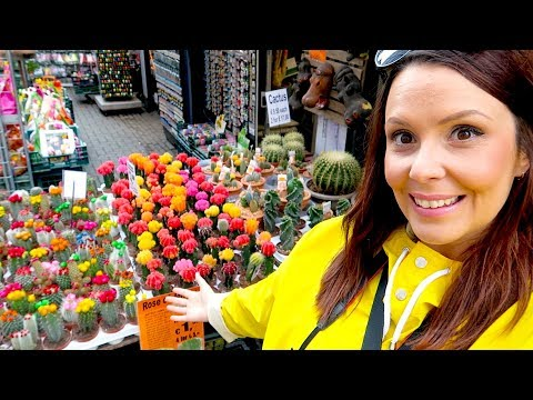HOUSE PLANT SHOPPING IN AMSTERDAM!