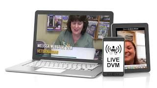 Online Vet Tampa Veterinary Hospital