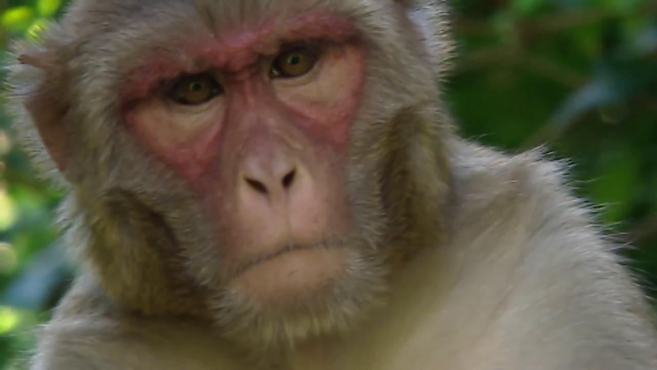 Animals like us : Animal Language - Documentary