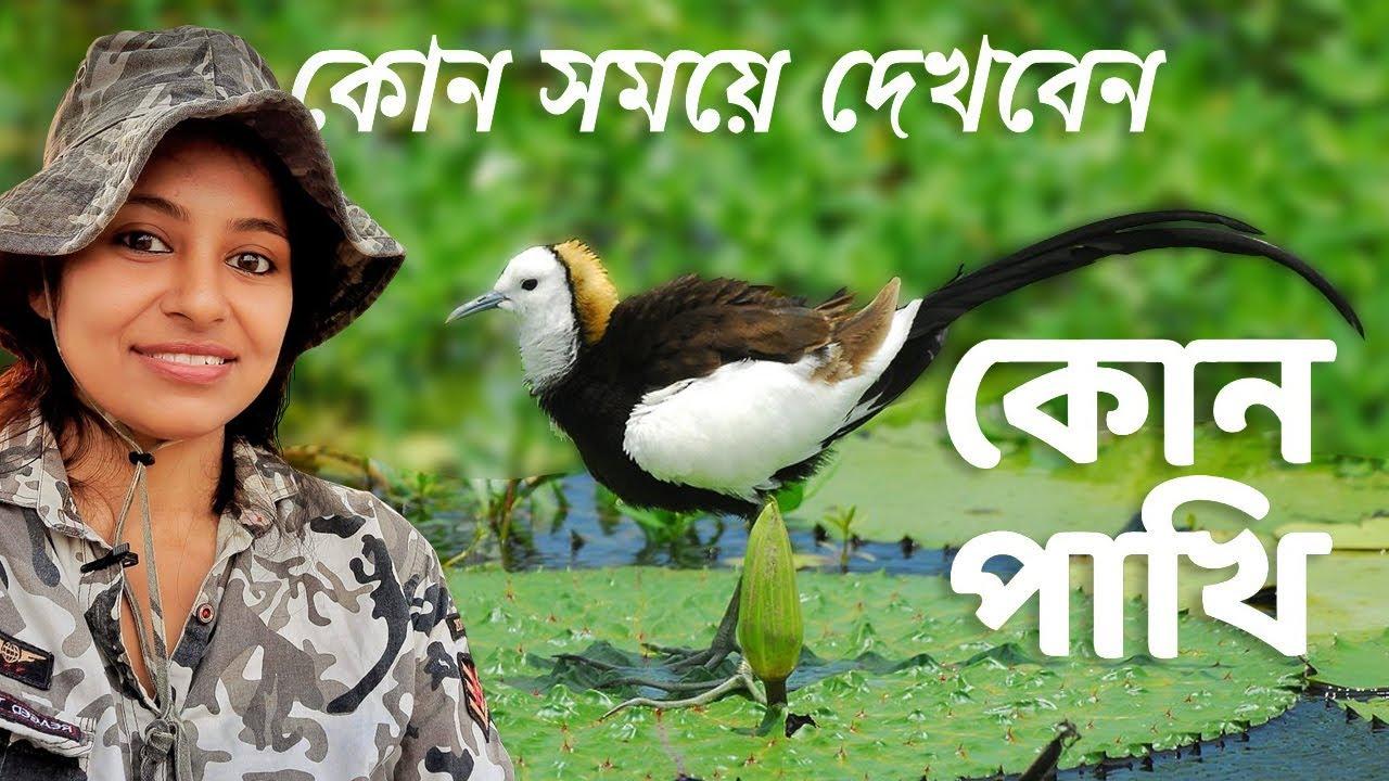 Birds in Different Season | How to Watch Birds | Birdwatching | Migratory Birds |