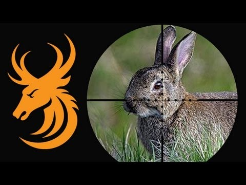 Night vision rabbit shooting with the NiteSite NS200 and Ruger 10/22 Target