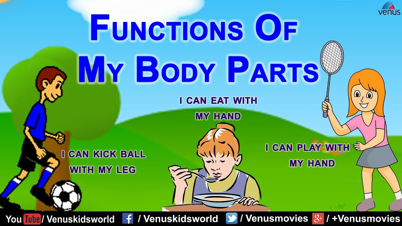hight resolution of Functions Of My Body Parts - YouTube