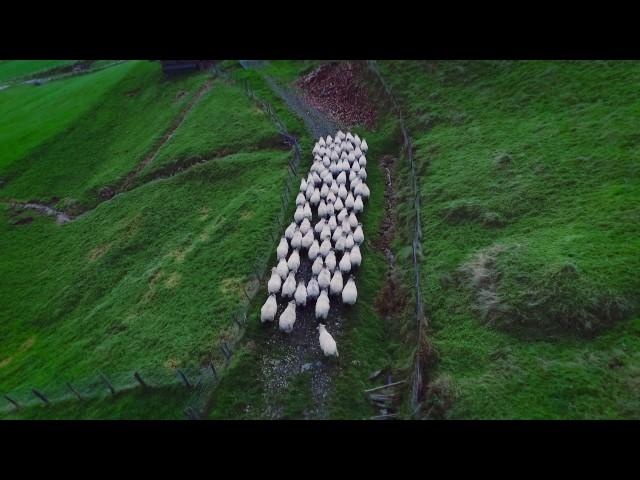 Ardizain Dronearekin - Erreizabal baserrian - Legazpi