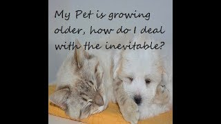 My pet is growing older, how will I deal with the inevitable?