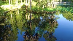 Crystal Springs in Pasco County Florida                  #268