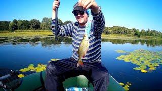 Кайфовая рыбалка с маховой удочкой. Краснопер, плотва и карась - азбука поплавочной ловли.