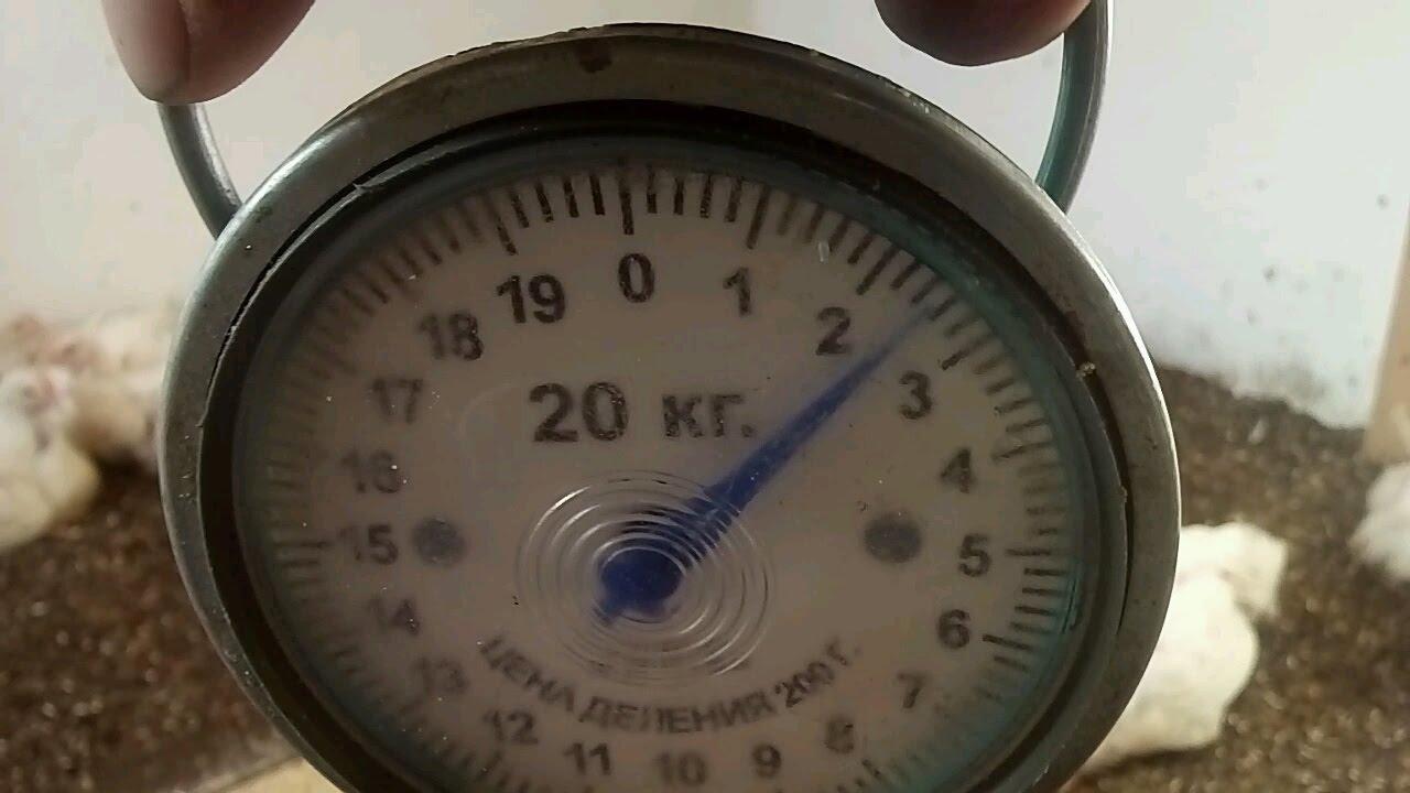 БРОЙЛЕРЫ живым весом (домашний откорм) КОББ-500, РОСС-308, РОСС .