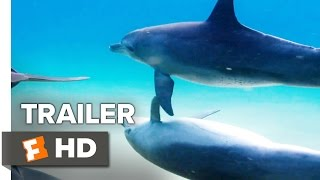 Disneynature's Dolphins Trailer #1 (2018) | Movieclips Trailers