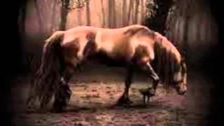 horse magic-whiskey lullaby